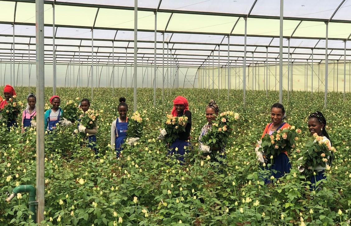 Sher Ethiopia: We geloven dat gezamenlijke afspraken bijdragen aan duurzame sierteeltketen