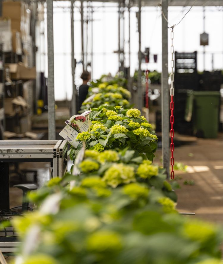 Dank Anbau widerstandsfähiger Pflanzen braucht Jonkers Elshout kaum Chemikalien