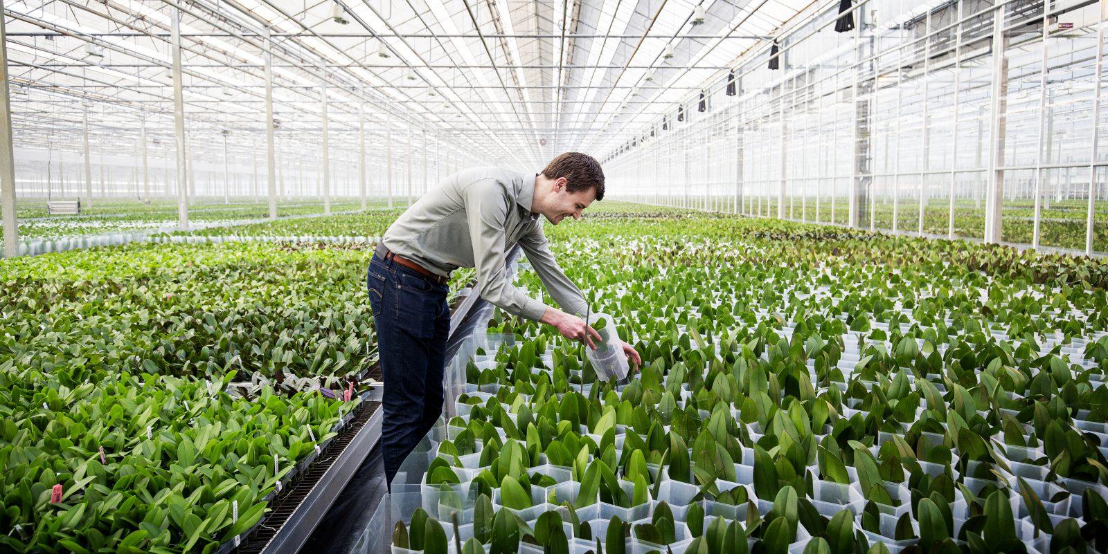 """Stolk Flora: """"Wir züchten unsere Pflanzen so effizient wie möglich, aber nicht um jeden Preis."""""""